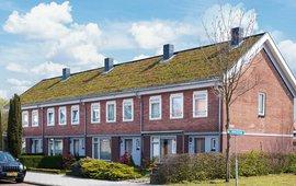 Groene daken in een Dakenstroom-project.
