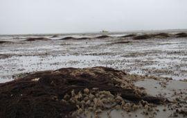 Riffen schelpkokerwormen in de Waddenzee. Tijdens laagwater kenmerken de riffen zich door zanderige bulten en poelen met water
