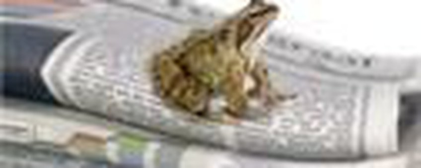 beesten in het nieuws