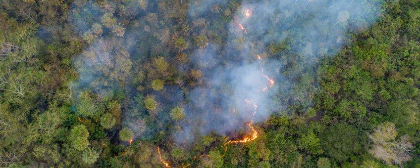 Bosbranden in de Pantanal, Zuid-Amerika