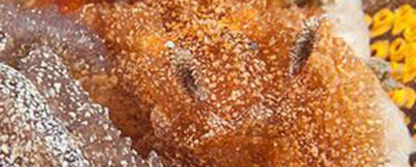 Bruine plooislak