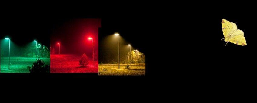 licht op natuur - primair
