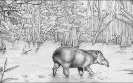 In het Mioceen was Nederland ook af en toe land. Tapirs struinden door de moerasbossen.