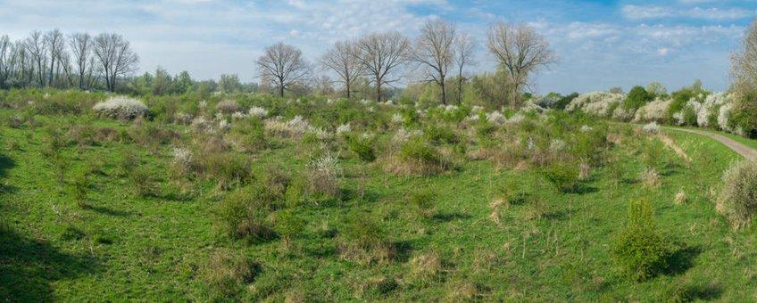 Afwisseling meidoorns en grasland in beeld middels fotomast