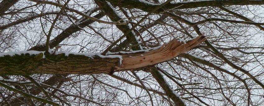 Sneeuw boom brekende takken