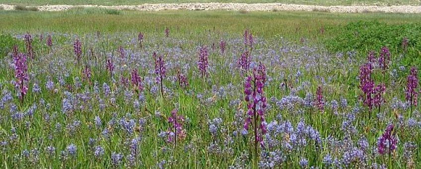 bloemrijke hooiland kroatie