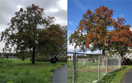 leadfoto van moseiken campus Wageningen University