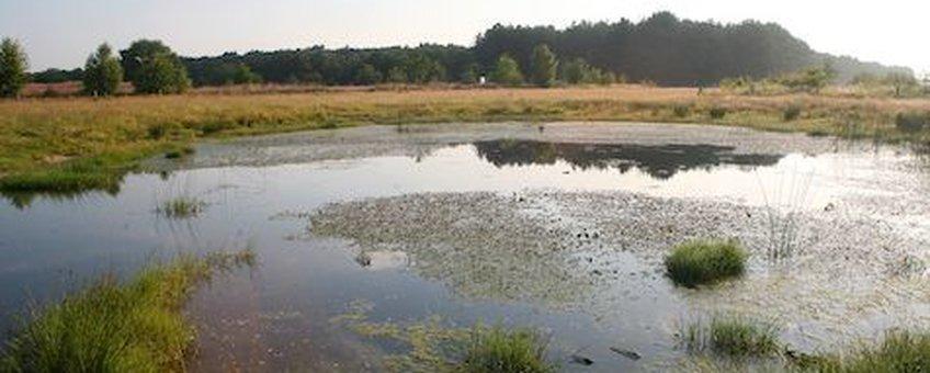 Een van de nieuwe wateren in het Strijper Aa gebied met een weelderige watervegetatie van fonteinkruiden en drijvende waterweegbree (Foto: Jöran Janse)