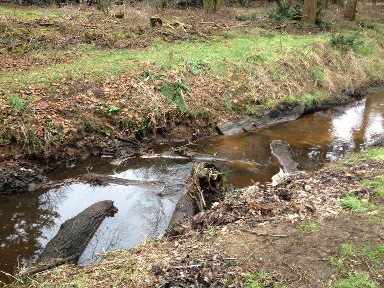Stammen in een visgraatpatroon in de Snelle loop, een van de onderzochte Brabantse beken