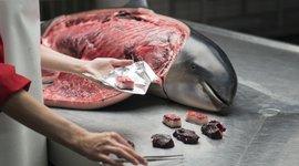 Uitvoeren van een sectie op een overleden bruinvis (eenmalig exclusief gebruik WUR)