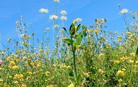 bloemen - primair
