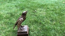 Bronzen Spreeuw, Heimans en Thijsse Prijs