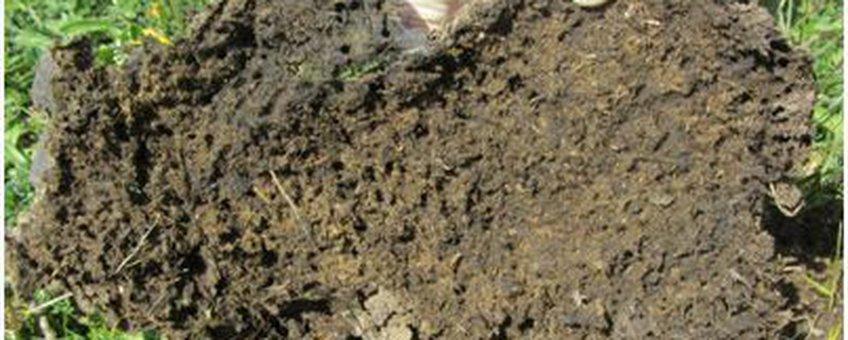 Mest omgekeerd, op zoek naar mestkevers