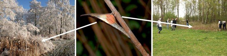 Pop van het oranjetipje moet 8-9 maanden veilig hangen. Daarom hangt deze niet in het grasland, maar in het bos, bosrand of ruigte