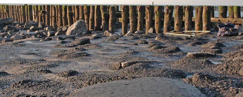 Asfaltering van de getijdenzone, zoals hier bij Westkapelle, heeft tot gevolg dat vrijwel alle leven uit deze zone jaren lang verdwijnt. In dit gebied kwam de Kleine alikruik rond 1976 nog voor.