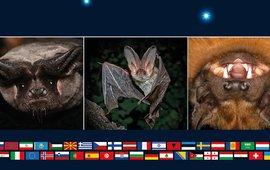 Internationale Nacht van de Vleermuis 2021