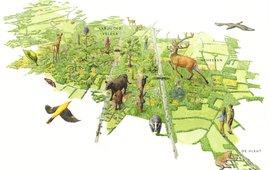 Toekomst natuurontwikkeling Groene Woud
