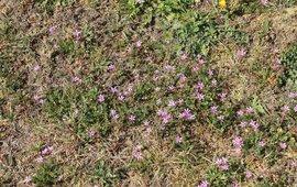 Door de droogte verdwijnen grassen en komen bloemen terug