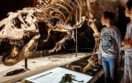 T. rex Trix in Naturalis