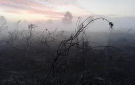 Vroeg in de ochtend, na de brand op De Malpie