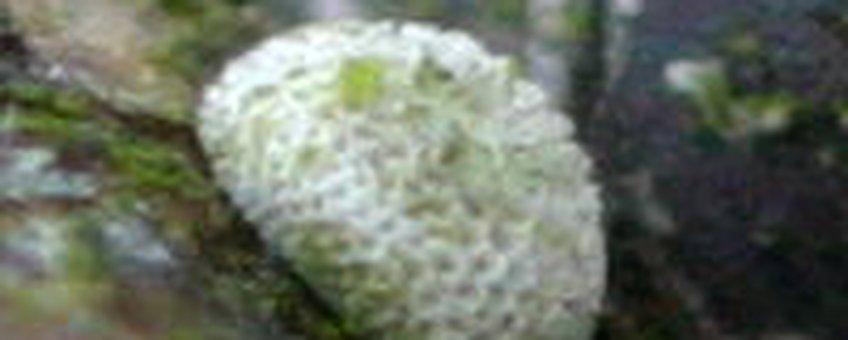 eitje sleedoornpage
