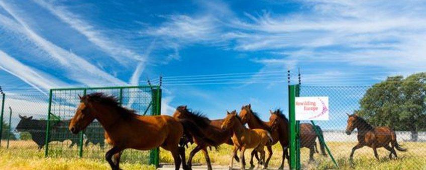 Wilde paarden VOOR EENMALIG GEBRUIK
