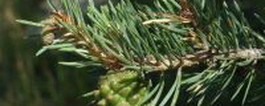 Grove Den (foto: Natuurkalendergids)