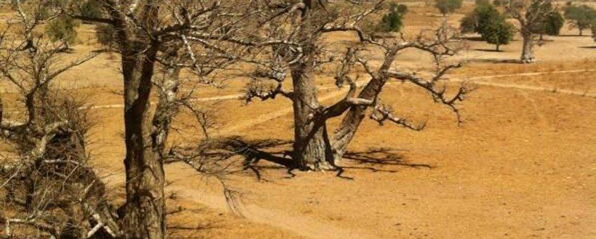 Agrarisch gebied in Senegal, januari 2014.