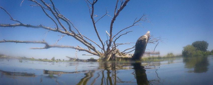 Bakenboom in het water Hemelrijkse Waard Noord-Brabant