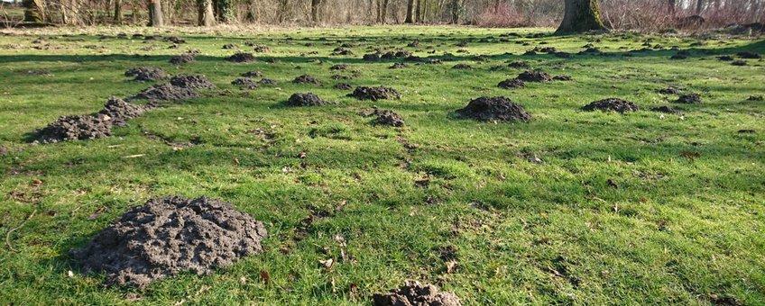 Een veld vol molshopen EENMALIG GEBRUIK