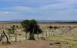 Fence Greater Mara