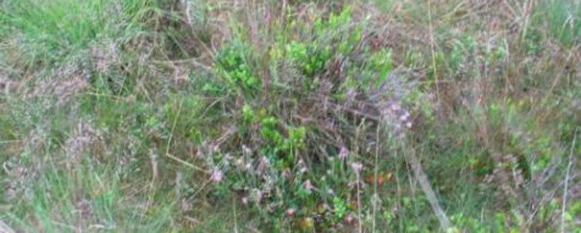 Groene Heide