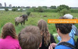 Konikpaarden en publiek op de Landtong Rozenburg in het Rotterdamse havengebied. EENMALIG GEBRUIK