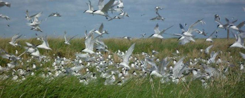 vogels griend