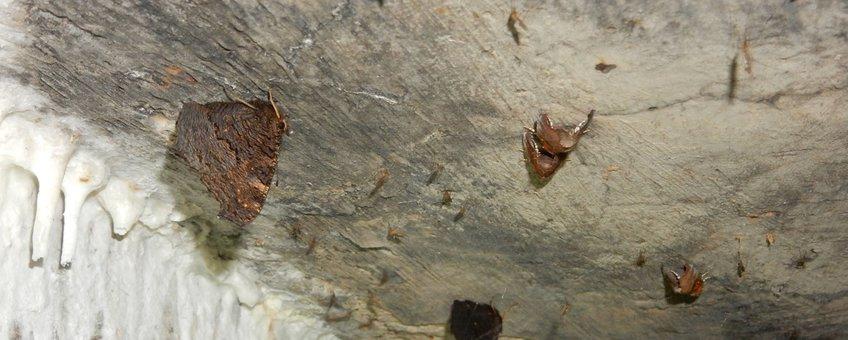 dagpauwoog overwinterend in bunker - primair