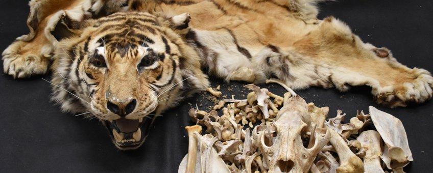 Tijgerhuid en tijgerbotten