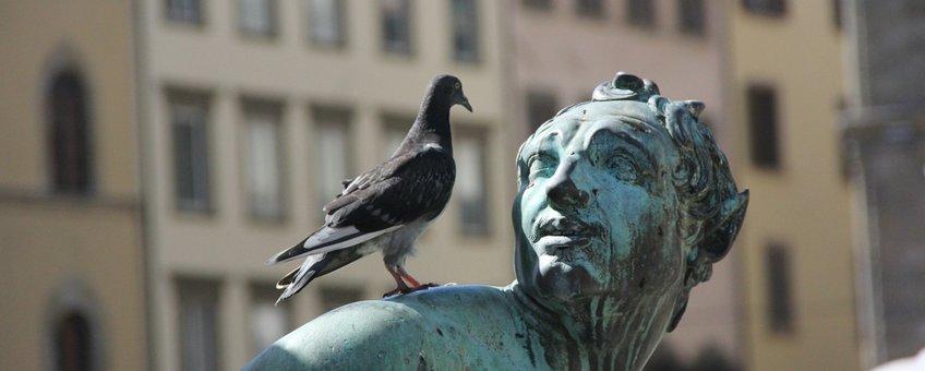 pigeon, duif