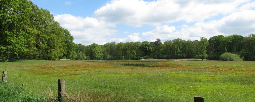 schraal grasland op voormalige landbouwgrond in de Achterhoek
