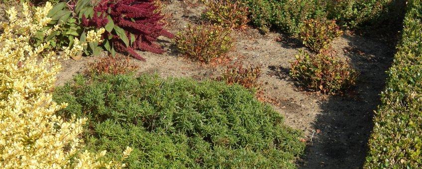 tuin met scheefbloem