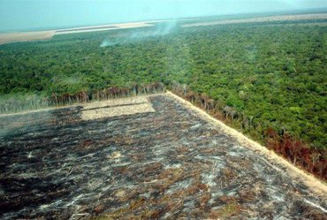 Amazone-ontbossing in MatoGrosso, Brazilië