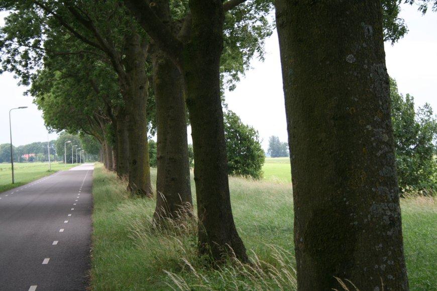 Essentaksterfte Fraxinus excelsior bomen langs weg