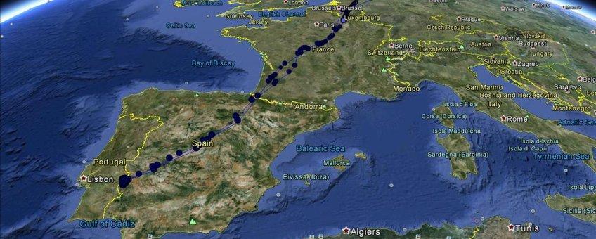 GPS-loggerdata van mannetje blauwe kiekendief Focko, 2012/2013.