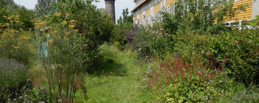 gevarieerde tuin