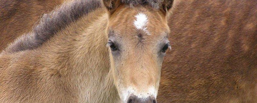 Pony,  GNU-licentie voor vrije documentatie
