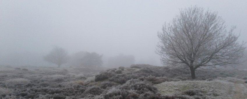 Winters heide landschap
