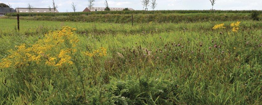 bloemrijk terrein boerenlandvlinders Groningen