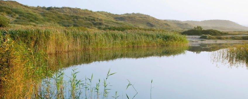 Water in duinen
