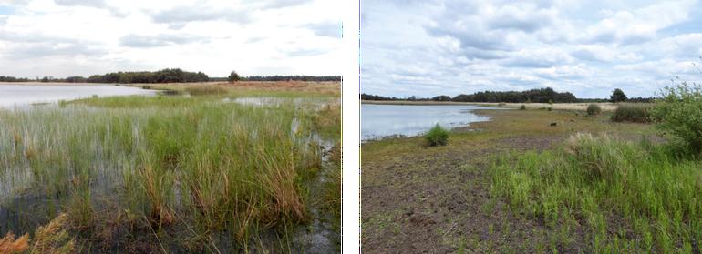 De zuidkant van het Beuven op 25 mei 2015 (links) en 25 mei 2019 (rechts). In 2015 leefde hier nog een grote populatie speerwaterjuffers die in 2019 volledig was verdwenen. De voor deze soort belangrijke zeggevegetatie was afgestorven