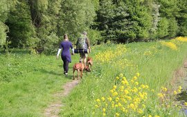 Backpackers met honden in Mallebos