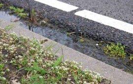 Deens lepelblad lang wegkant foto Wout van der Slikke